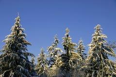 jultrees Royaltyfri Fotografi