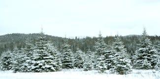 jultrees Fotografering för Bildbyråer