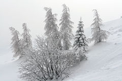 jultrees Royaltyfria Bilder