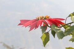 Julväxt Fotografering för Bildbyråer