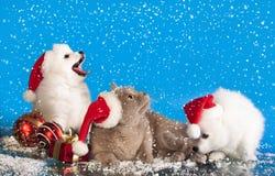 Julvalpar och katt Arkivbild