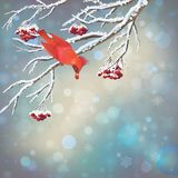Julvektor snöig Rowan Berries Bird Card Arkivbild