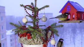 Julvideomaterial med fåglarna arkivfilmer