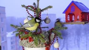 Julvideomaterial med fåglarna stock video