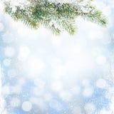Julvinterbakgrund med snögranträdet Arkivfoto