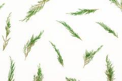 Julvintermodell med trädfilialer på vit bakgrund nytt år för bakgrund Lekmanna- lägenhet, bästa sikt arkivbild