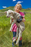 July 17, 2016 - Little girl holds sheep on Hastings Mesa near Ridgway, Colorado from truck royalty free stock photo