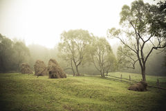 The July morning in far away Carpathian village. Misty July warm morning in the highlands of Ukrainian mountains. The hay on farmers land Royalty Free Stock Image