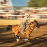 JULY 22, 2017 NORWOOD COLORADO - Cowboys ride and rope cattle during San Miguel Basin Rodeo, San.  Dirt,  Motion Royalty Free Stock Photo
