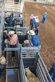 JULY 18, 2017 NORWOOD COLORADO - Young cowboys prepare to ride sheep during San Miguel Basin, .  Riding,  dirt. JULY 18, 2017 NORWOOD COLORADO - Young cowboys Stock Images