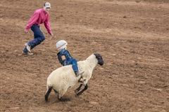 JULY 22, 2017 NORWOOD COLORADO - Young cowboys ride sheep during San Miguel Basin Rodeo, San. Animal, Norwood. JULY 22, 2017 NORWOOD COLORADO - Young cowboys royalty free stock image