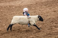 JULY 22, 2017 NORWOOD COLORADO - Young cowboys ride sheep during San Miguel Basin Rodeo, San.  Dangerous,  Horse. JULY 22, 2017 NORWOOD COLORADO - Young cowboys Stock Photos