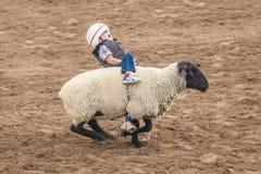 JULY 22, 2017 NORWOOD COLORADO - Young cowboys ride sheep during San Miguel Basin Rodeo, San. Bull, Man. JULY 22, 2017 NORWOOD COLORADO - Young cowboys ride stock image