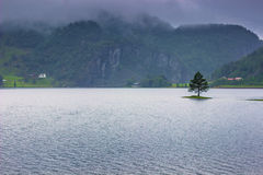 July 21, 2015: Tree in a lake on the norwegian countryside, Norw. July 21, 2015: A Tree in a lake on the norwegian countryside, Norway Royalty Free Stock Image