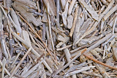 Jumbled driftwood sticks. In a pile Royalty Free Stock Image