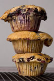 Jumbo blueberry muffins Royalty Free Stock Image