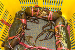 Jumbo Crab Royalty Free Stock Photo