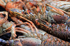 Jumbo Lobster on the Grill 3 Stock Photos