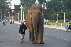 Jumbo in Phnom Penh. A man take a walk with his elephant in the heart of Phnom Penh city Stock Images