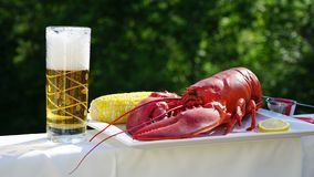Jumbo red lobster and chilled fizzy beer. A glass of chilled fizzy beer and a plate of cooked jumbo red lobster with a yellow corn on cob stock image