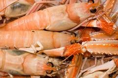 Jumbo shrimp. S at fish market Stock Image