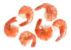Jumbo Shrimp Royalty Free Stock Image