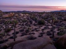 Jumbon vaggar efter solnedgång n Joshua Tree National Park royaltyfri fotografi