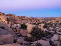 Jumbon vaggar efter solnedgång n Joshua Tree National Park arkivfoton
