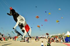 Kites day - flying cow. Jumeirah sandy Beach Dubai kite day colorful people following event hundreds of kites flying in sky, flying cow also stock image