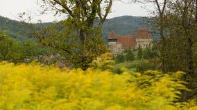Jument de Copsa, la Transylvanie, Roumanie Images libres de droits