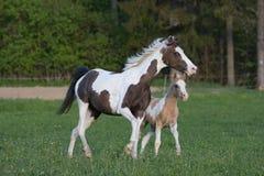 Jument de poney avec le petit poulain Images libres de droits