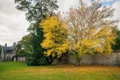 Jumieges修道院在秋天,与下落的黄色的树在庭院离开 免版税图库摄影