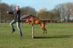 Jump. Dog and leader at agility jumping over a hurdle at a large dog place in beautiful nature stock photo