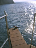 Jump?. This sea bird looks like wanting to jump off the platform royalty free stock photo