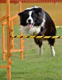 Jump agility Stock Images