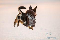 jump dog royalty free stock photography