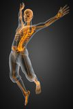 Jump man radiography. Made in 3D Royalty Free Stock Photo