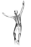 Jump man radiography Royalty Free Stock Photography