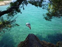 Jump from the rock. Man jumping in the Adriatic sea from the rock Stock Image