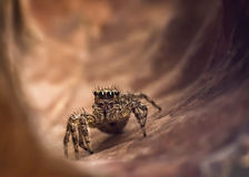The jump spider discover for exit of tunnel Stock Photos