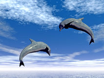 Jump_Dolphin2 Stock Image
