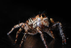 Jumper In The Dark Royalty Free Stock Photography