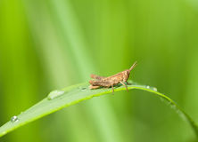 Jumper on grass blade Stock Photography