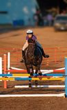 Jumper Straight On. Equestrian Event - Jumper Straight On - from front- blurred background Royalty Free Stock Photo