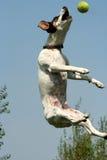 Jumpin Gato 4 Foto de archivo libre de regalías
