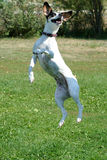 Jumpin Gato 5 Imagen de archivo