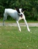 Jumpin stålar royaltyfria bilder