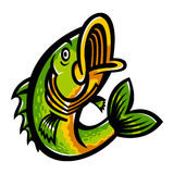 Jumping Bass Fish Royalty Free Stock Photo