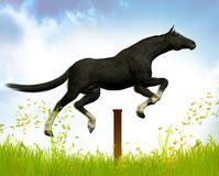 Jumping Black stallion Royalty Free Stock Photo