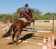 Jumping brown horse Royalty Free Stock Photo